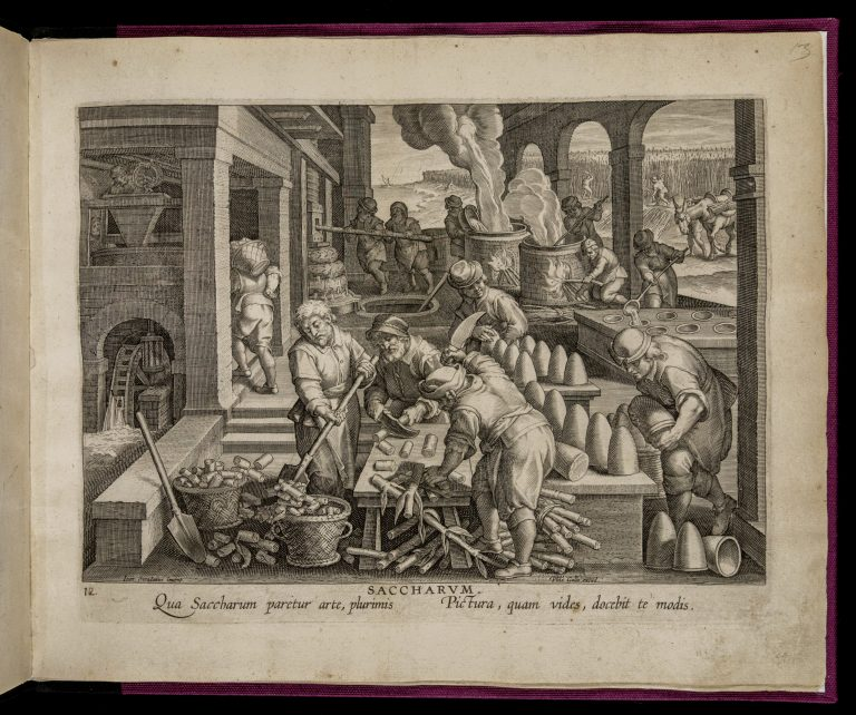 Etching of white men participating in the sugar refinement process, including chopping up sugar cane, melting it in vats, and removing finished sugar from drying containers.